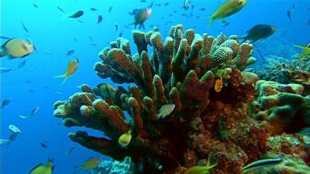Les secrets de la Grande Barrière de corail