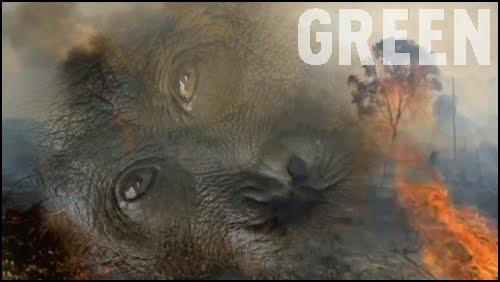 """Résultat de recherche d'images pour """"documentaire green"""""""