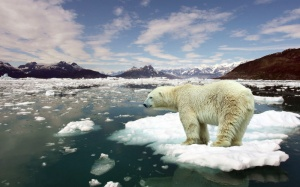 ice-floes-sea-water-melting-snow-polar-bear_1440x900